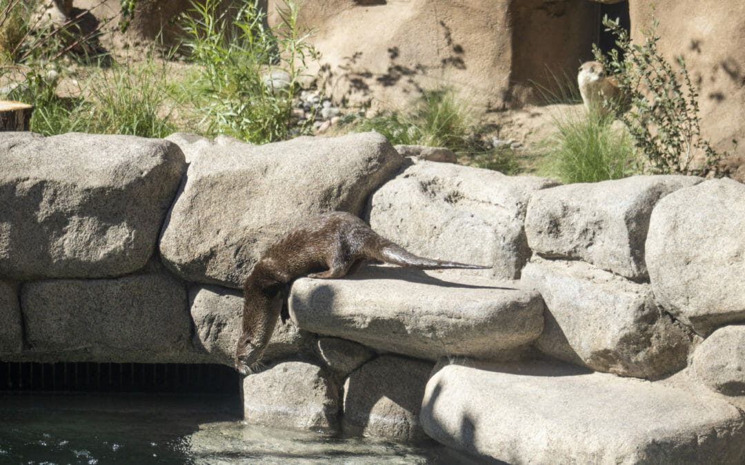 North American River Otter Exhibit